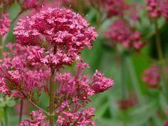 Dry Garden, Garden Plants, Backyard Plan, Starting A Garden, Garden Borders, Cut Flowers, Garden Planning, Gardening Tips, Succulents