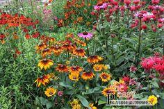 Een prairietuin   - is een onderhoudsvrije tuin die vol staat met bloemen in allerlei kleuren. - bloeit elke seizoen anders en ziet er dus elk seizoen anders (maar wel toonbaar) uit. - trekt veel insekten en bijen aan. - kun je de hoogte in werken maar hoeft niet - heeft een arme grond nodig, de grondsoort die nu op het terrein ligt is dus ideaal.
