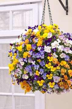 Viola Teardrops Mixed - Flowering for several months from late winter, the small faces of these pretty violas will bring lots of cheer to your pots, windowboxes and hanging baskets. They are incredibly prolific and will produce masses and masses of their