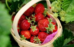 Would love to have fresh strawberries every day!