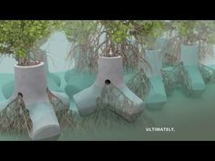 TetraPOT uses mangroves to grow a greener sea defense system | Inhabitat | Bloglovin'