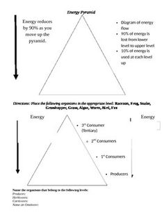 Food Web Energy Pyramid Template  Ag Biology  Ecology