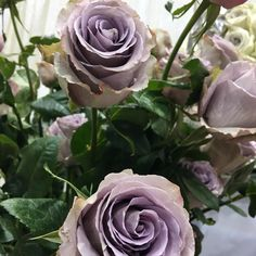 We are passionate about flowers, we ship overnight nationwide to the floral wholesale trade since 1994 looking for different and unique flowers!