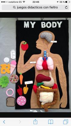 Felt human organs felt my body mat felt story play food human anatomy мое тело человек из фетра анатомия