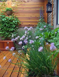 Idea for ground level deck off stairs / garage with planter boxes for fruit, veggies, flowers.