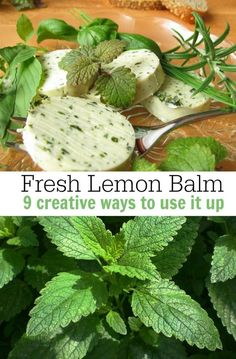 Creative Uses for Lemon Balm When it Takes Over Your Garden! Love to grow lemon balm but not sure what to do with it? Here are a few creative uses for lemon balm when it starts to take over the garden! via Diane Hoffmaster Lemon Balm Recipes, Lemon Balm Uses, Herb Recipes, Drink Recipes, Healing Herbs, Medicinal Plants, Growing Herbs In Pots, How To Grow Lemon, Herb Garden Design