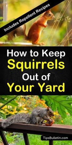 Tips And Tricks For How To Keep Squirrels Out Of Your Yard. Gain proficiency with The Best Ways To Keep Pesky Squirrels From Getting Into Your Bird Feeders And Ruining Your Flower Beds Using Tried And True Methods And Diy Natural Squirrel Repellent. Organic Gardening, Gardening Tips, Organic Farming, Biodynamic Gardening, Allotment Gardening, Gardening Zones, Gardening Services, Squirrel Repellant, Raccoon Repellent