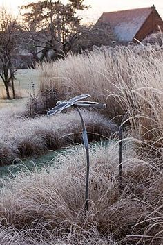 Frosted grasses at THE MANOR HOUSE, STEVINGTON, BEDFORDSHIRE