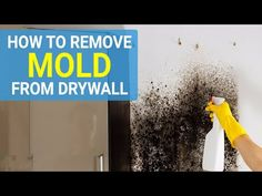 Methods for killing mold differ depending on if the walls are painted or not. In case the drywall is coated, it can be easy to clean by merely using water and an appropriate cleaning agent. Kill Black Mold, Clean Black Mold, Remove Black Mold, Cleaning Mold, House Cleaning Tips, Cleaning Agent, Cleaning Hacks, Wall Molding, Diy Molding