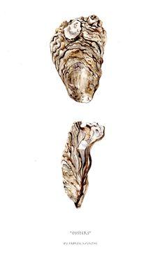Oysters illustration by frøken mynthe//Rikke Jacobsen in watercolor