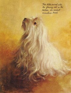 """""""This little animal with the flowing coat is the Maltese, an ancient miniature breed."""" - Rien Poortvliet"""