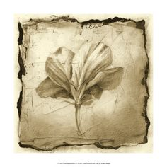 Botanical (Decorative Art) Posters at AllPosters.com