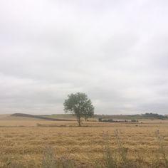 ¿A que no parece #Arkaia ? ¡Buen miércoles! #turismo #rural junto a #Vitoria #Gasteiz #accesible #ecologia #conalma #concalma #igerseuskadi #igersgasteiz @nekatur_nekazalturismo_elkarte @toprural @lonelyplanet_es @turismo_vitoria @agrotravel