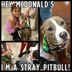 Pit bulls way safer than anything mcdonald's has to offer! This is in regard to the ad with negative breed stereotyping which McDonalds has been airing.