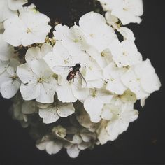 Lauren Davison photo, pollination