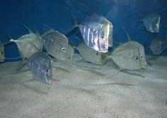 استراتيجية تمويه تحترفها أسماك المحيط