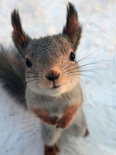 What Inspires. - - What Inspires… Niedliche tiere Eichhörnchen Cute Creatures, Beautiful Creatures, Animals Beautiful, Nature Animals, Animals And Pets, Happy Animals, Smiling Animals, Animals In Snow, Small Animals