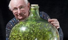 Thriving since 1960, garden in a bottle: Seedling sealed in its own ecosystem and watered just once in 53 years