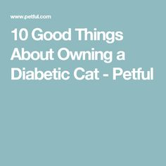 10 Good Things About Owning a Diabetic Cat - Petful