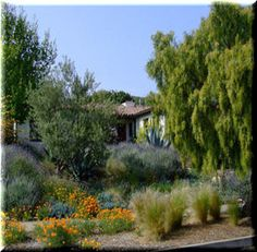 Google Image Result for http://www.sb.watersavingplants.com/Thumbnail/Images/Lompoc%2520Med.jpg