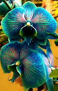 南無阿彌陀佛NamoAmituofo ... Amazing ORKID Welcome in Love Flowers... Love it...… #orkıd# #flowers#