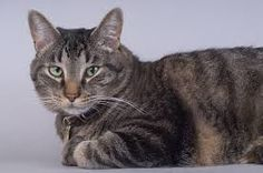Image result for cat's ears