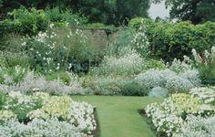 All White Flower Garden