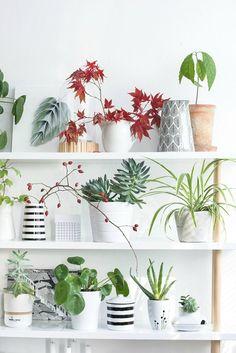 Pour orner les étagères, pourquoi ne pas opter pour des plantes d'intérieur placées dans de jolis pots déco ?