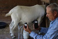Milk Machine Rechargeable Vacuum-Pulse Goat Sheep Cow 1 Gallon Dansha Farms PATENT > Made in America ! Fast Shipping, Easy To Clean, Simple, and Inexpensive Light Weight, Sealed System 60 Ml Standard and 35 Ml Small Teat Cups Included Buy Milk, Milk Frothers, Milk The Cow, Goat Barn, Hobby Shops Near Me, Raising Goats, 2 Gallons, Baby Goats