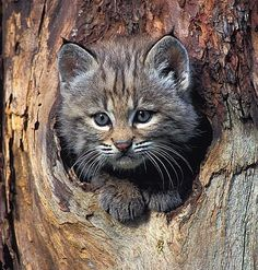 How to Get Your Cat Down Out of a Tree - http://www.kittenswhiskers.com/how-to-get-your-cat-down-out-of-a-tree/