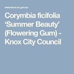 Corymbia ficifolia 'Summer Beauty' (Flowering Gum) - Knox City Council