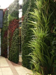 """""""Jardim Vertical em Muros e Fachadas"""" O jardim vertical está ganhando cada vez mais espaço nos projetos arquitetônicos das residências por ser uma linda opção de acabamento, por ajudar a purificar o ar e por ser uma boa alternativa para quem tem pouco espaço. """" VERDEJANDO ARQUITETURA PAISAGÌSTICA"""" RUA TERESINA 534 MOÓCA SÃO PAULO SP FONES: 55 11 2654-1139 - 2638-8999"""