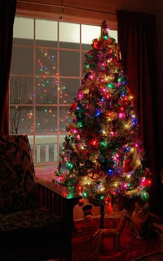 Clear Christmas Tree Lights