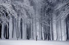 Llegan los paisajes invernales… ¿Estamos preparados? Parte 3