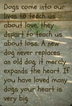 Dog Training Tips: Dogs come into our lives to teach us about love, t...
