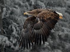 Eagle's flight by Zdenek Ondrasek