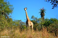 Just 40mins from Durban, Tala Private Game Reserve makes for the perfect day out! With animals and birds in abundance you won't be disappointed.