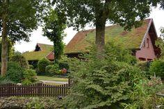 Wo sind die #Dächer? Where are the #roofs? #greenroof #gründach #dachbegrünung #nature