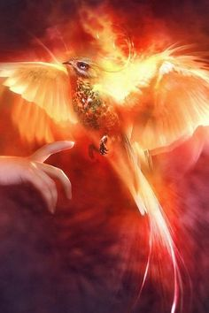 Phoenix Spirit --Brings Rebirth, Renewal & Eternal Protection<<<All credits to artist. Here's some facts about Phoenixes. Magical Creatures, Fantasy Creatures, Fantasy Kunst, Fantasy Art, Art Magique, Arte Sailor Moon, Phoenix Art, Phoenix Rising, Foto Art