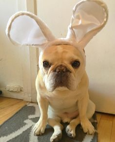 dog イヌ 犬可愛い画像まとめ http://ift.tt/1VP13Af