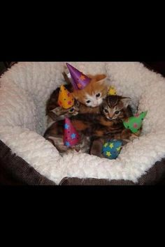 Party Kittens All Snuggled Up I Never Gave My Cats Birthday Partys