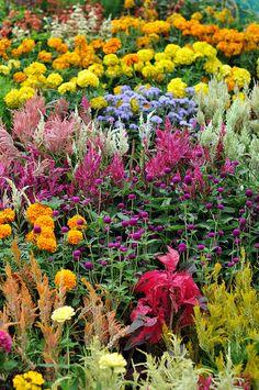 Colorful Flowers, Bangalore, India