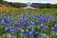 The best places to see the #bluebonnets in #Austn Texas. www.pughproperties.com