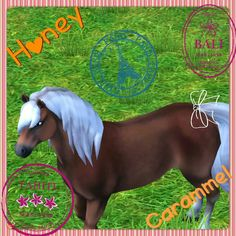 My horse in StarStableHorses Name:HoneyCaramel Breed: Hafflinger