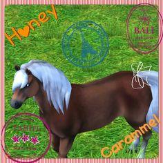 My horse in StarStableHorses Name:HoneyCaramel Breed: Hafflinger