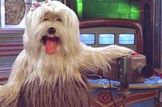 'TV Colosso' - Com a difícil missão de substituir o sucesso do 'Xou da Xuxa' nas manhãs da rede Globo, o programa era protagonizado por 'cachorros-bonecos'. A ideia era simular a rotina de uma emissora de TV canina, que tinha figuras que iam da apresentadora e protagonista, Priscilla, ao diretor de imagem, Borges, que chamavam os desenhos dos anos 90.