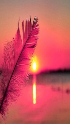 Sunset View with Plume - Desktop Nexus Wallpapers Blur Photo Background, Flower Background Wallpaper, Sunset Wallpaper, Flower Backgrounds, Photo Backgrounds, Wallpaper Backgrounds, Iphone Wallpapers, Nature Pictures, Free Pictures