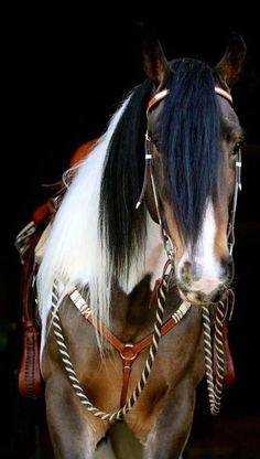 35 Beautiful Horse Pictures And Photos Gallery - Horses - Pferde All The Pretty Horses, Beautiful Horses, Animals Beautiful, Cute Animals, Simply Beautiful, Beautiful Gorgeous, Absolutely Stunning, Caballos Clydesdale, Clydesdale Horses