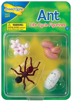 Children can see how Ants change as they grow with Insect Lore's Ants Life Cycle Stages These oversized, anatomically correct figures have been accurately painted and sculpted to show the four stages of the ants development: Eggs - Larvae - Life Cycle Stages, Life Cycles, Ants, Sculpting, Expo, Children, Europe, Outdoors, Plastic