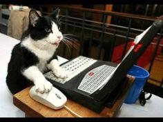 II Capítulo 1-1: Sam el gato. Rutina diaria. Reflexive verbs